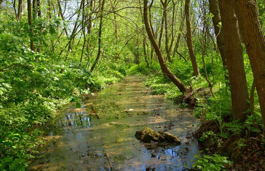 Rezervaţia naturalǎ din România unde ţestoasele sunt la ele acasǎ – Hagieni, se aflǎ la doar 15 kilometri de Mangalia. Foto şi video